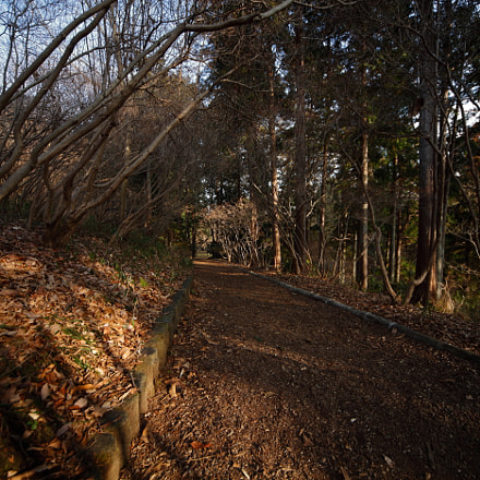 Iwamoto Mountain Park, Canon EOS 5D MARK II, Sigma 12-24mm f/4.5-5.6 EX DG ASPHERICAL HSM