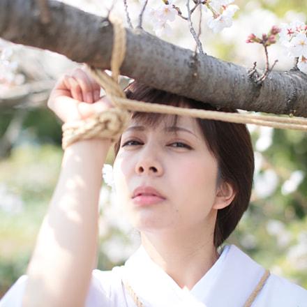 TOKYO GIRL KINBAKU, Canon EOS 5D MARK III, Sigma 50mm f/1.4 EX DG HSM
