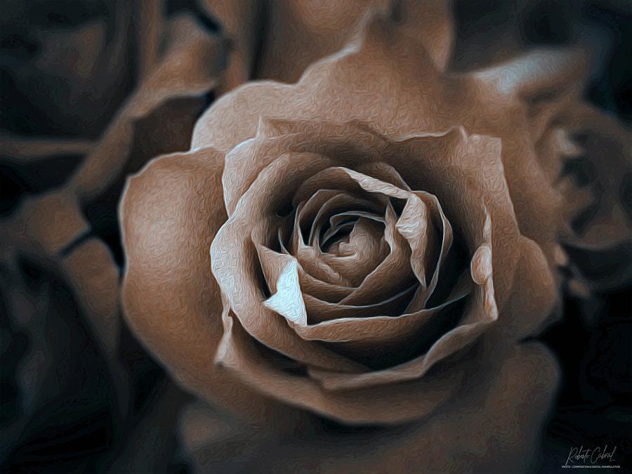 ¿Y si no fuera una rosa? de Roberto Cabral │Image & Photography en 500px.com
