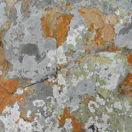 Sea moss, Nikon COOLPIX S3100