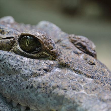 Croc, Canon EOS 1200D