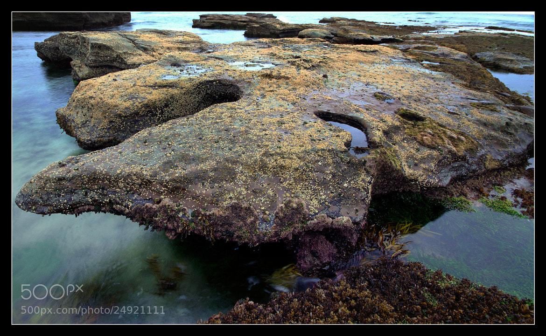 Photograph Rock life by Alan Daniel on 500px