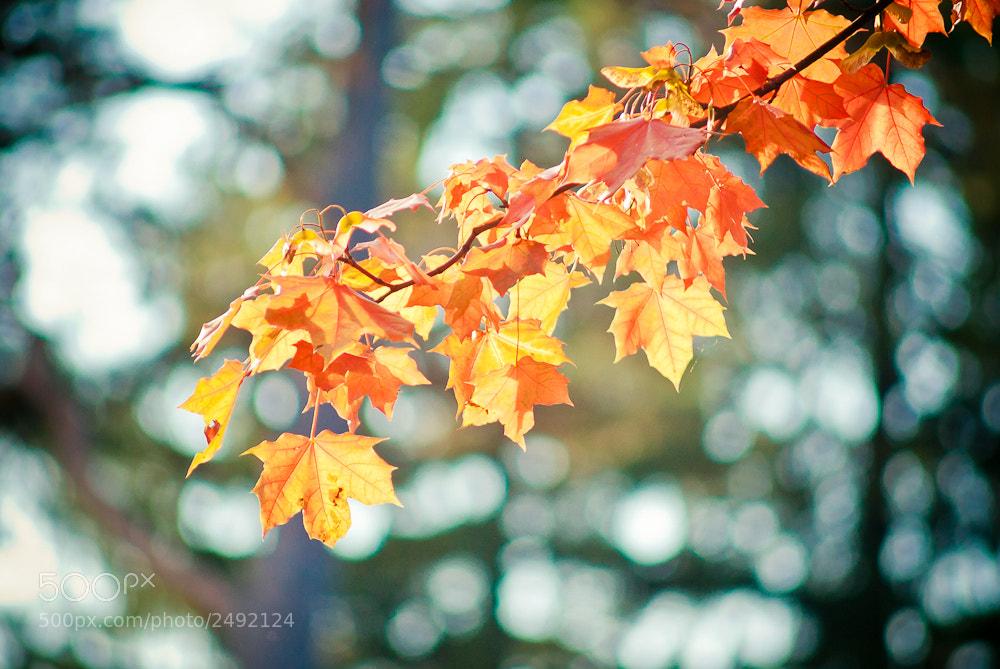 Photograph Autumn Leaves by Rafał Makieła on 500px