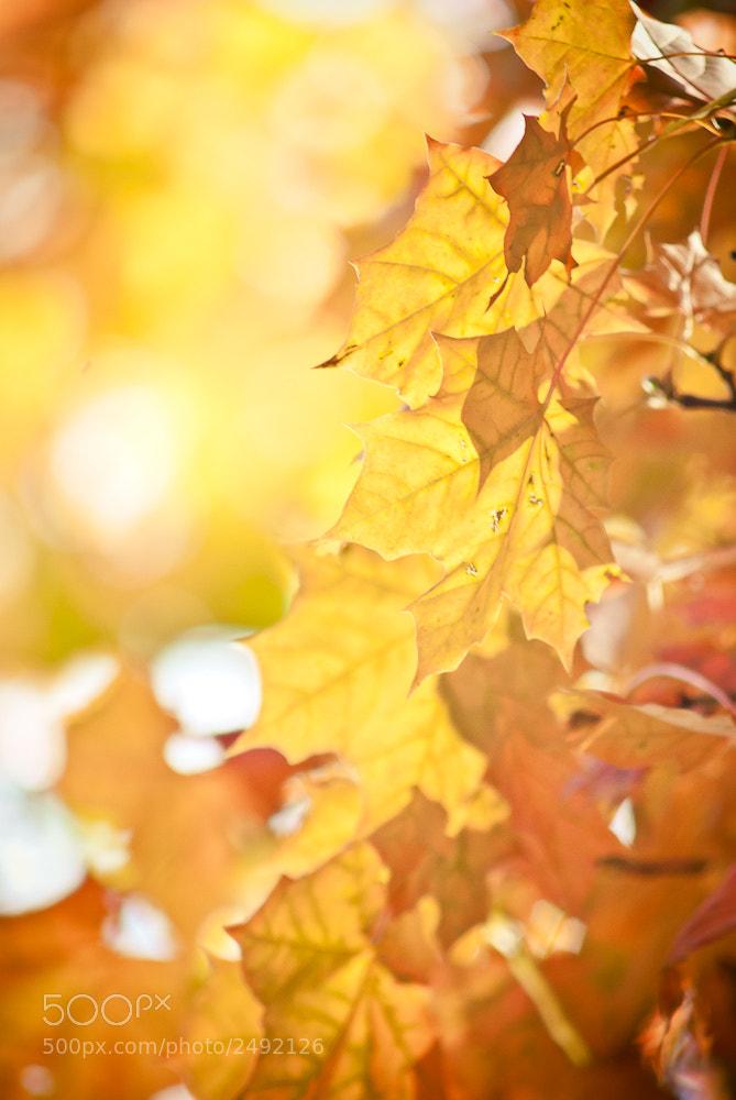 Photograph Autumn Leaves II by Rafał Makieła on 500px