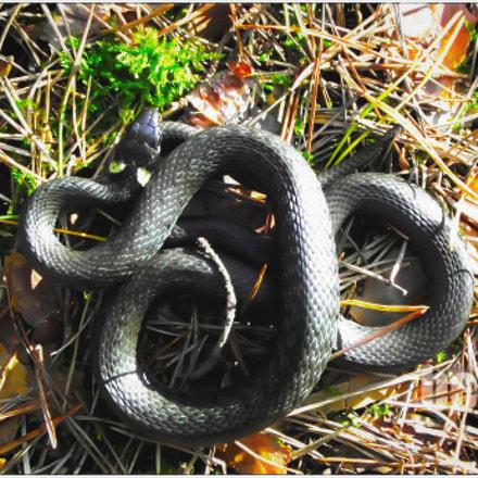 Sunbathing snake in the, Fujifilm FinePix S2500HD