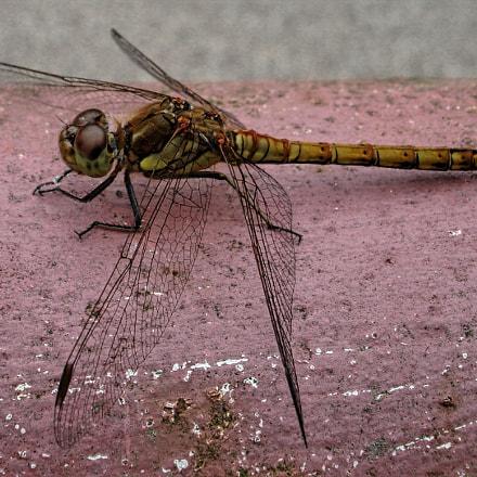 Dragonfly, Sony DSC-W100