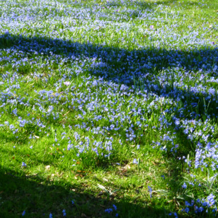 Frühling, Panasonic DMC-FS15
