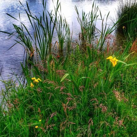 Sommerliche Ufervegetation Summery riparian, Panasonic DMC-LX1