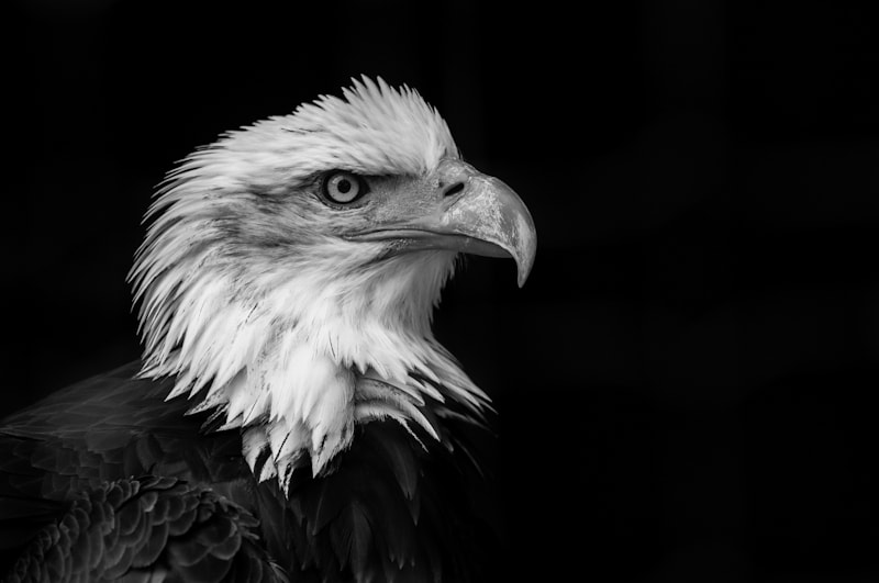Photograph Eagle's Vision by sander chauvel on 500px