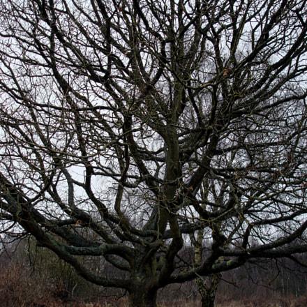 Tree branches, Sony DSC-W100