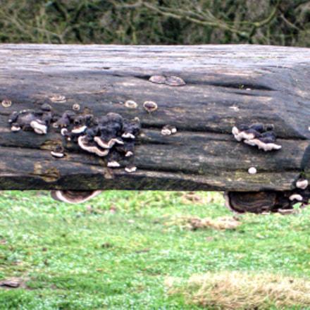 Old wooden bench, Sony DSC-W100