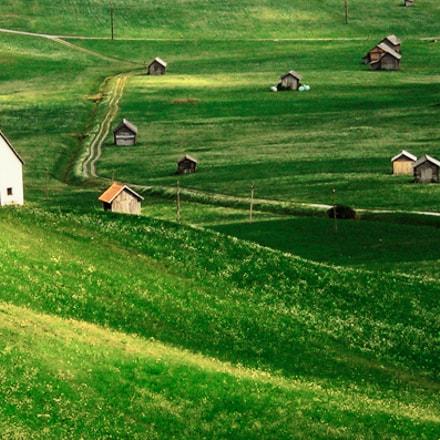 Green Alps, Nikon E5900