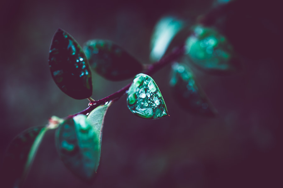 rainy day by Brian J. Matis on 500px.com