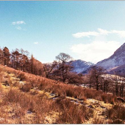 Golden Winter Colours, Canon EOS 55