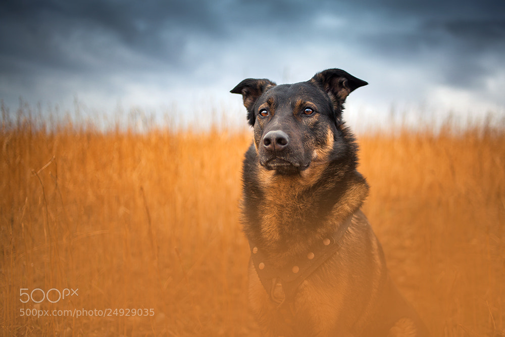 A dog in field -- dog photography tips