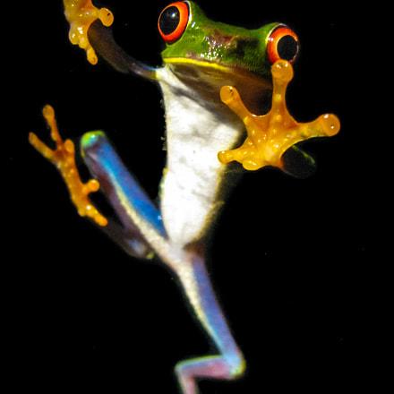 Monteverde Frog Ponds, Canon POWERSHOT SX100 IS