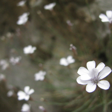 Flowers in Crete, Imbros, Canon POWERSHOT SX100 IS