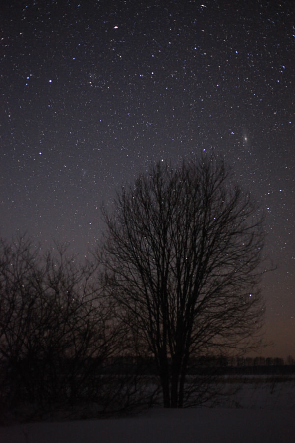 Туманности над деревом, автор — Maxim Tashkinov на 500px.com
