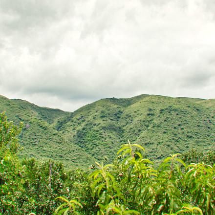 Peach plants in mountain, Nikon D7100, AF Zoom-Nikkor 35-135mm f/3.5-4.5 N