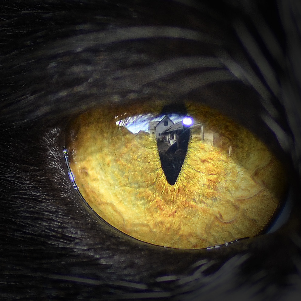 Photograph I see you by Imre Joo on 500px