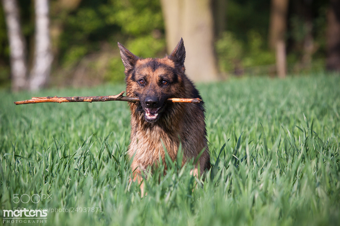 Photograph Fun With a Stick by Stefan Mertens on 500px
