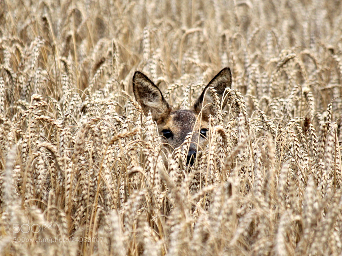 Photograph Catch Her In The Rye by Ger Bosma on 500px