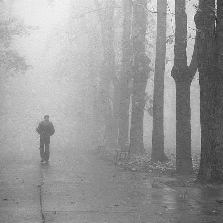 Fog in the park pt.1