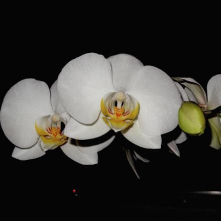 Orchids, Sony DSC-HX9V