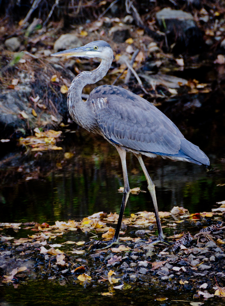 Photograph GBH by LaDonna Pride on 500px