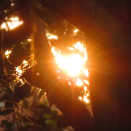Watching Through Leaves ..., Canon IXUS 510 HS