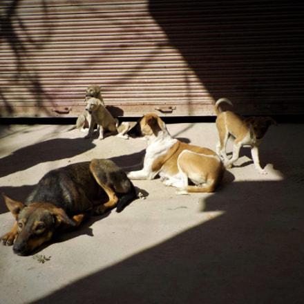 street family, Nikon COOLPIX W100