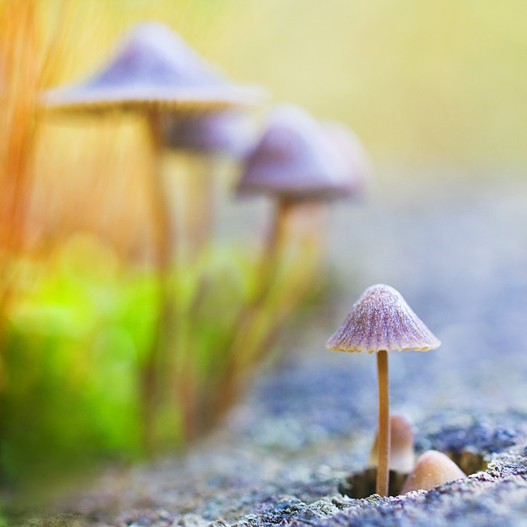 Photograph Mushrooms by Evgeniy Gostuhin on 500px