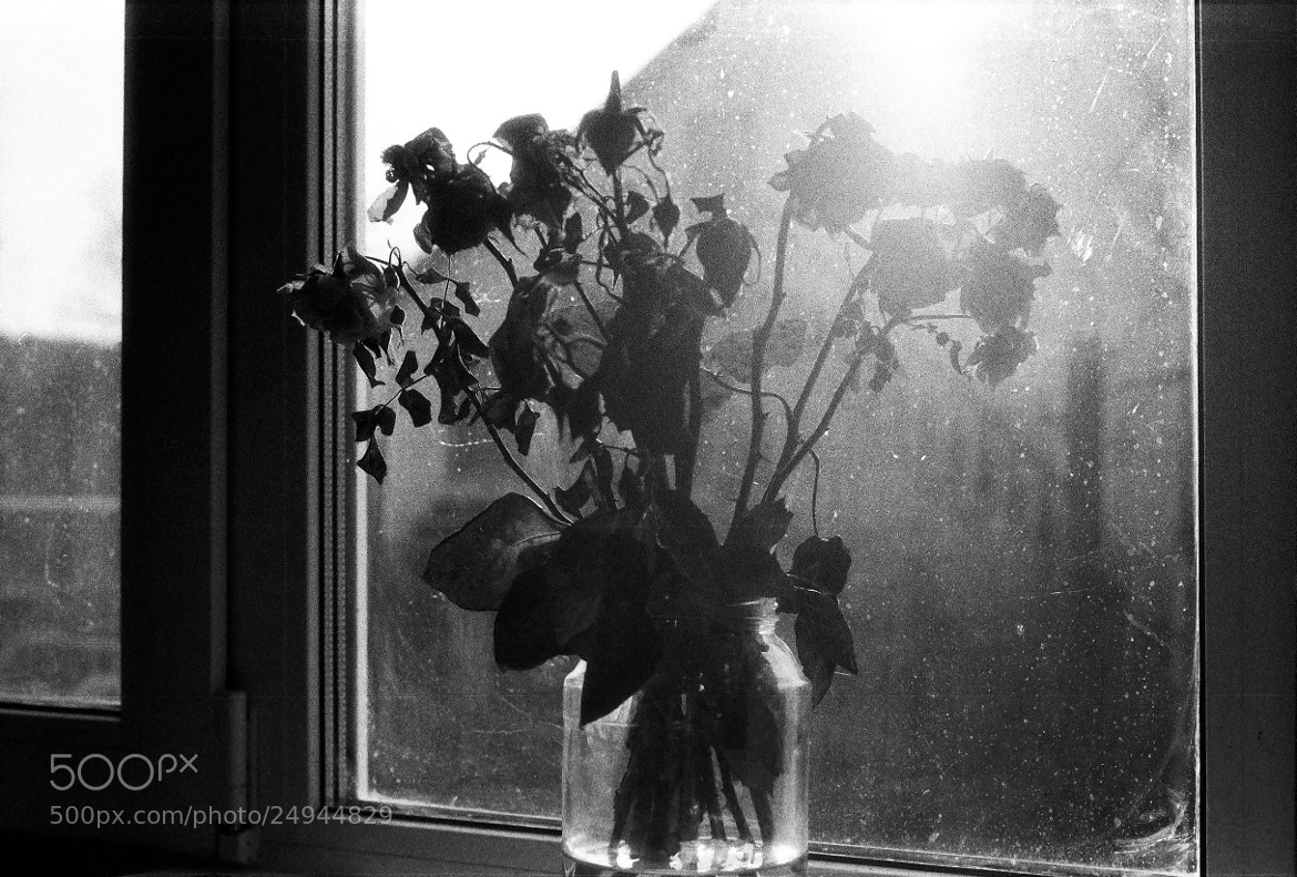 Photograph dead roses by ADME on 500px