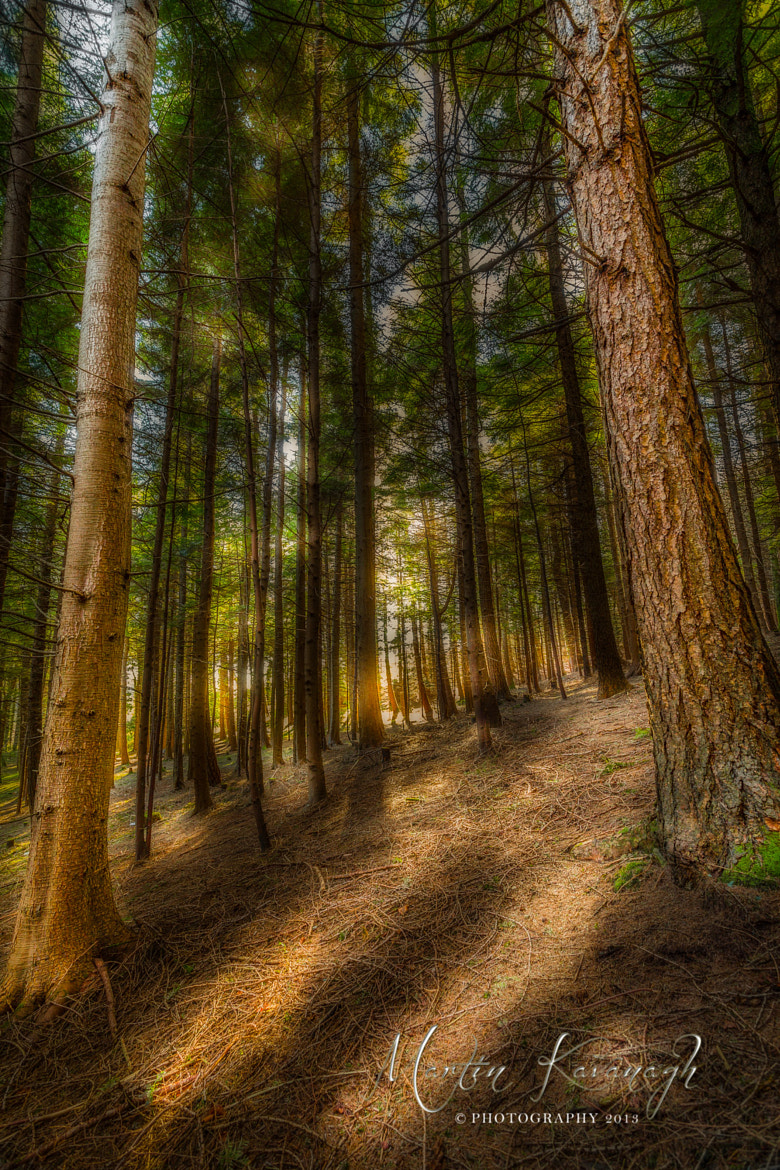 Photograph Kilclooney Wood.... by Martin Kavanagh on 500px