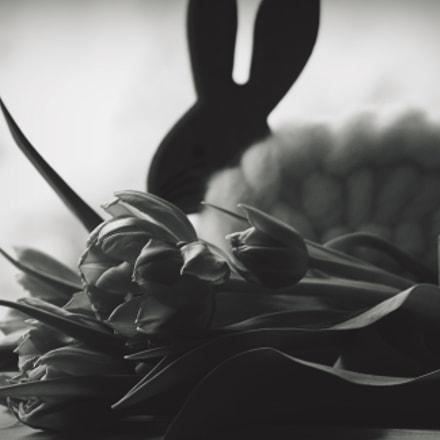 spring, Canon EOS 40D