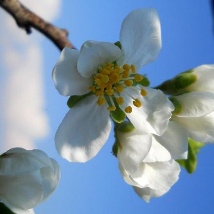 Spring, Nikon COOLPIX L21