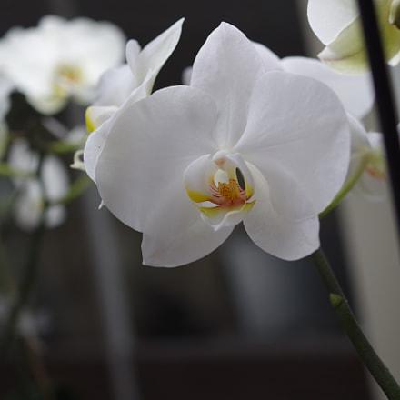 Office flower, RICOH PENTAX K-S2, HD PENTAX-DA 35mm F2.8 Macro Limited