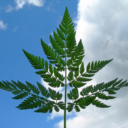 Leaf in the sky, Nikon E7900