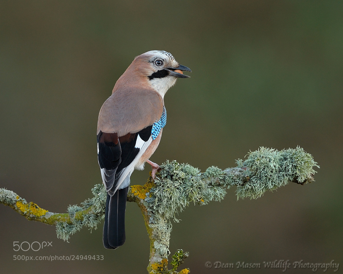 Photograph Jay & Lunch by Dean Mason on 500px