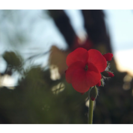 Untitled, Fujifilm FinePix S3200