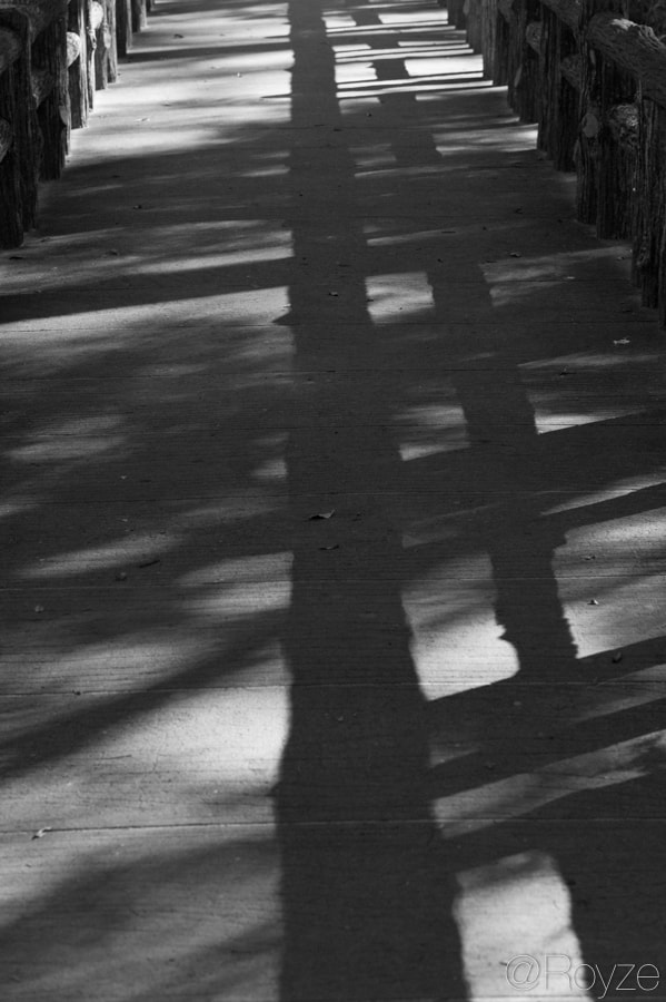 Photograph Shadowy connection by Royze   on 500px