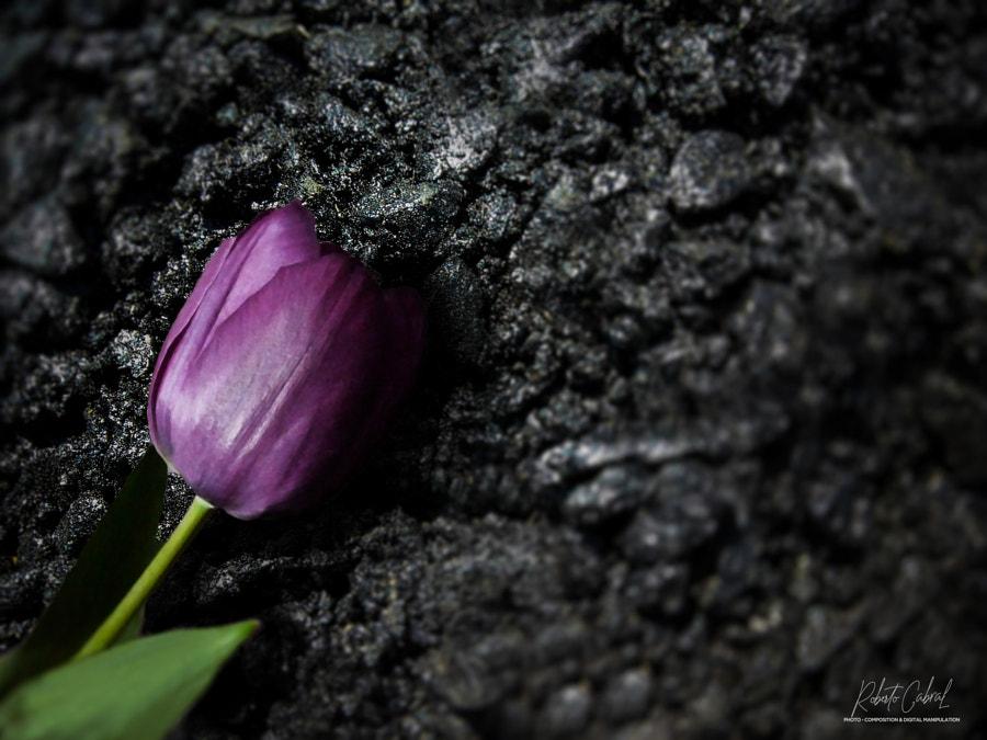 A los ojos de un poeta de Roberto Cabral │Image & Photography en 500px.com