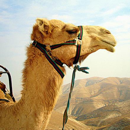 Camel, Sony DSC-P200