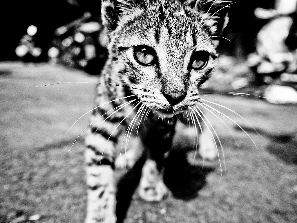 Photograph little tiger by Eki Han on 500px