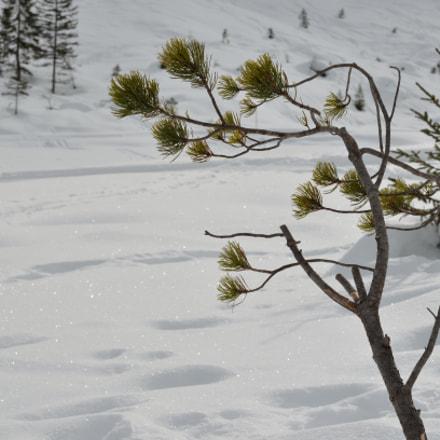 Little Tree, Nikon D5100, AF-S VR Zoom-Nikkor 24-85mm f/3.5-4.5G IF-ED
