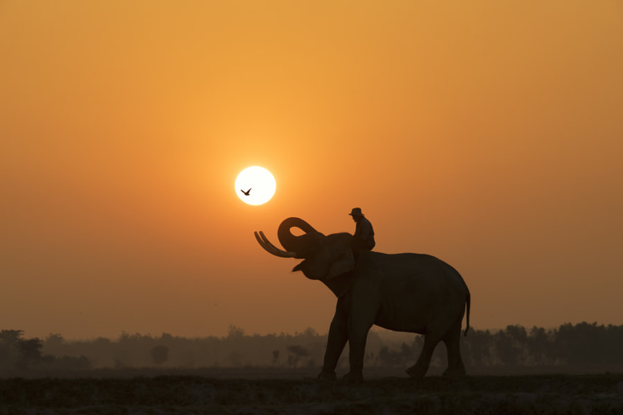 Happy Elephant by Smon Satitayangkul on 500px.com