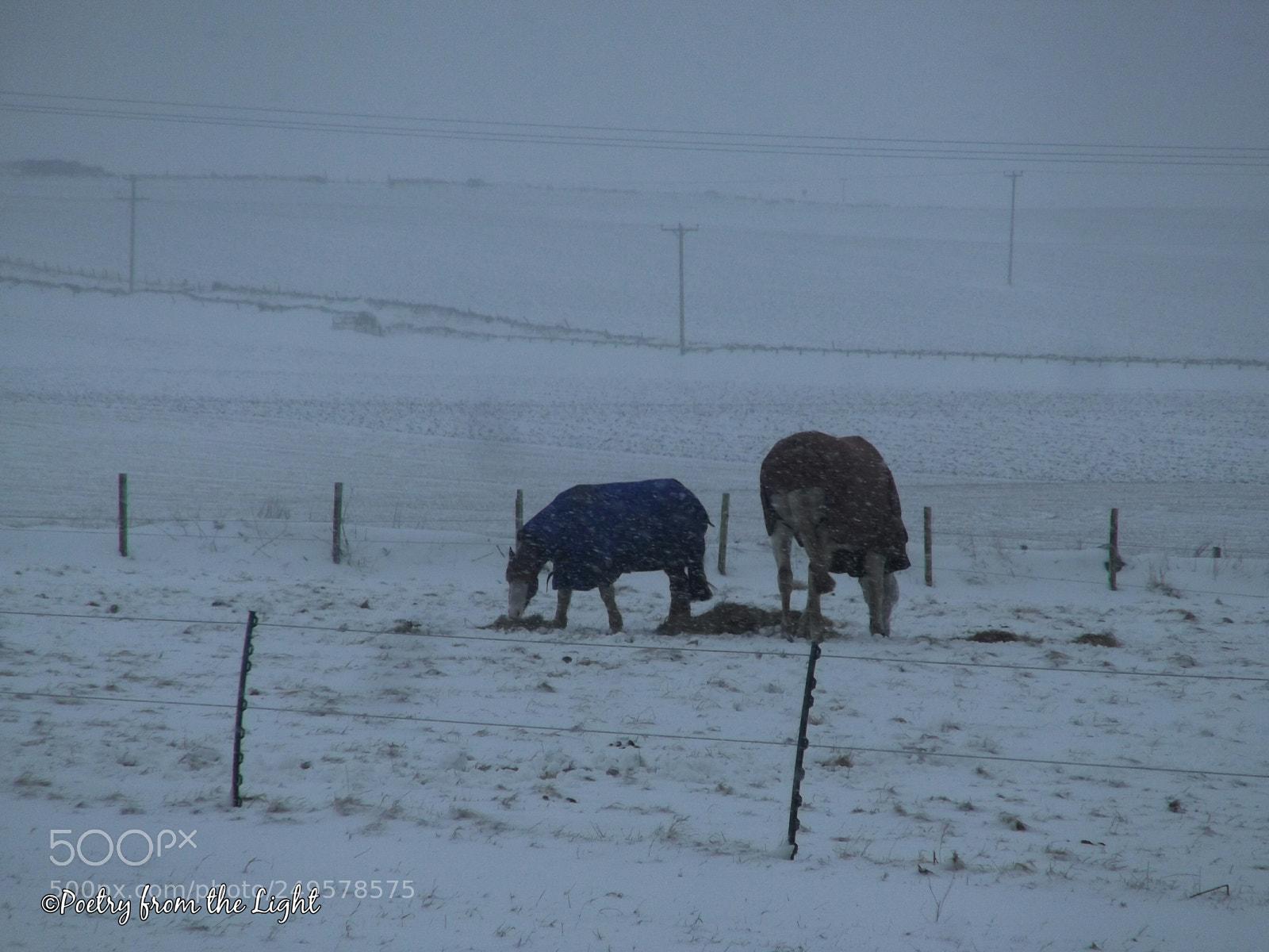 Snow & Breakfast, Fujifilm FinePix T350