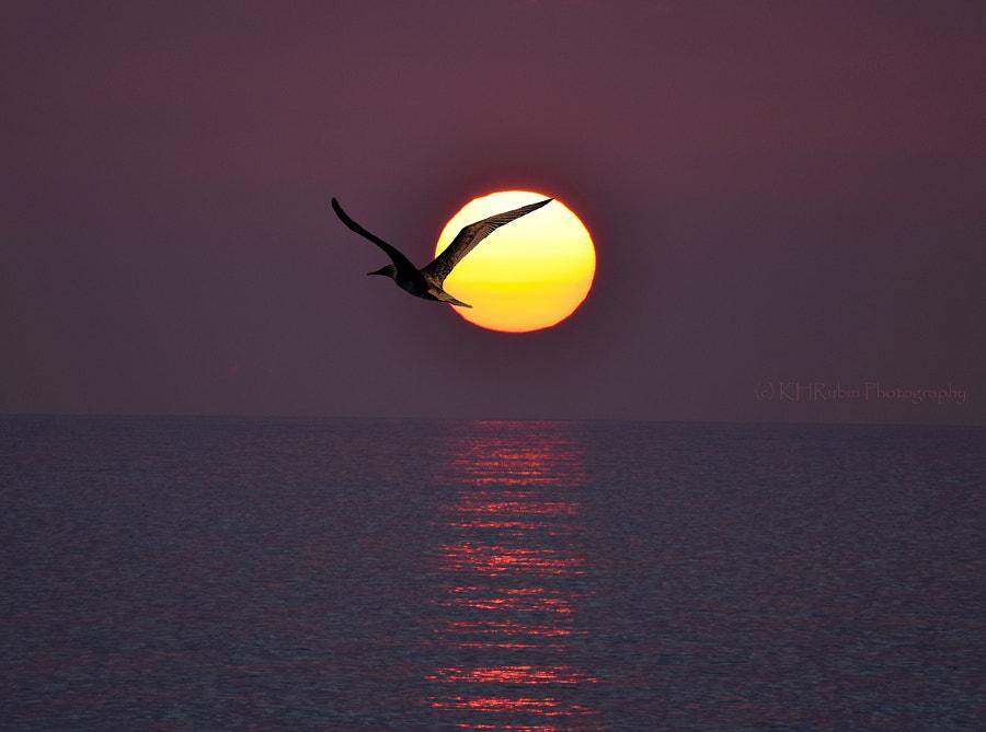 Seabird Sunset, автор — Ken Rubin на 500px.com