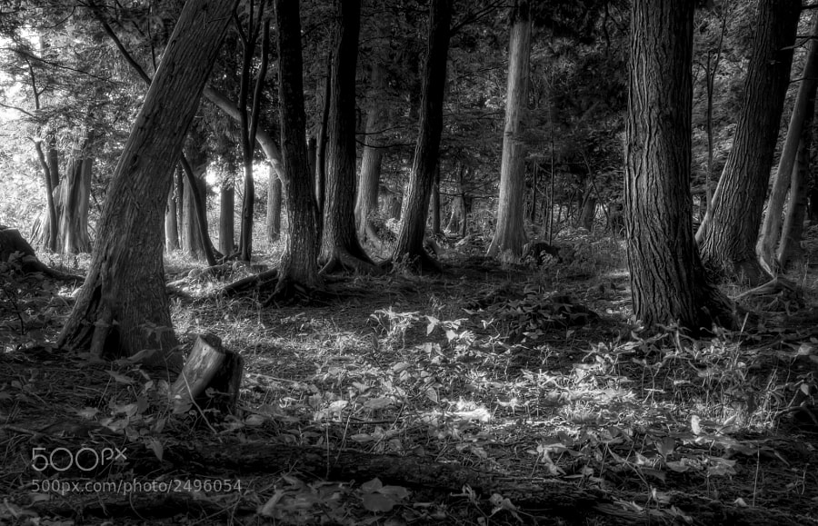 I love the magical feel of this photo.  This was taken in Door County, Wisconsin.  You can purchase this photo here: http://fineartamerica.com/featured/magical-forest-scott-norris.html.