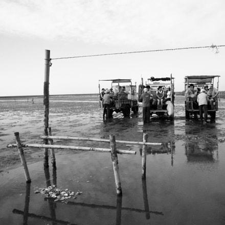 濕地之旅⋯⋯除了提供海牛搭乘外,也提供了鐵牛車支援海牛的不足,不過都是牛, Canon IXUS 210